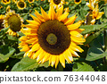 Close-up Sun Flower during sunny day 76344048