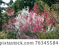 카오산 봄의 작은 부처님 성산 (こぼとけ 성산) 정상 꽃밭 76345584