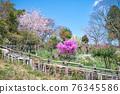 카오산 봄의 작은 부처님 성산 (こぼとけ 성산) 정상 꽃밭 76345586
