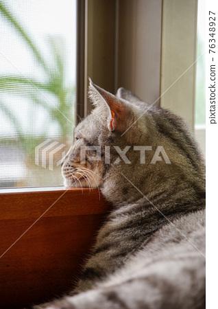 薩巴特貓 76348927