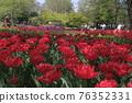 油菜花 油菜 花朵 76352331