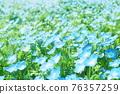 봄의 꽃 ~ 네모 피라 ~ 푸른 언덕 76357259