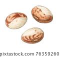 bean, beans, watercolour 76359260