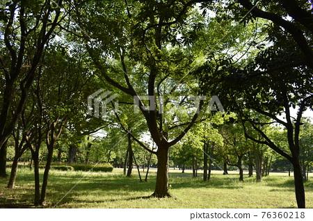 樹木 樹 樹棲 76360218