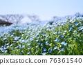 봄의 꽃 ~ 네모 피라 밭 76361540