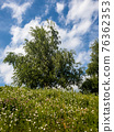 Birch trees grow on a slope, summer landscape 76362353