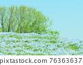 봄의 꽃 ~ 네모 피라과 푸른 언덕 76363637