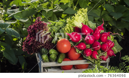 A set of fresh vegetables in a wooden box. Organic products concept 76364098