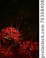 피안 꽃 히간 바나 76368408