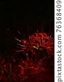 피안 꽃 히간 바나 76368409