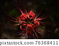 피안 꽃 히간 바나 76368411