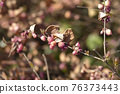 Coralberry 76373443