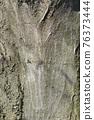 Common hornbeam 76373444