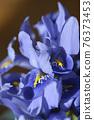 Iris Alida 76373453