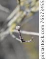 Flowering Dogwood Rainbow 76373455