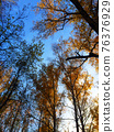 Autumn trees in the park with point of view. Yellow treetops in front of the blue sky 76376929