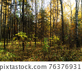 Beautiful forest or grove in the morning 76376931
