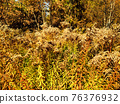 Autumn landscape in the park with yellow grass 76376932