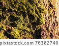 Moss on the bark of a tree on a sunny day. 76382740