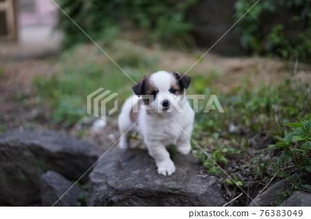 고개를 갸웃거리고 앞발을 들고 있는 강아지 76383049
