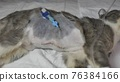 Postoperative wounds with a catheter in a young kitten. 76384166