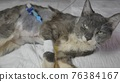 Postoperative wounds with a catheter in a young kitten. 76384167