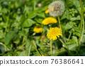 蒲公英 花朵 花 76386641