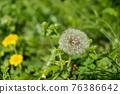 蒲公英 花朵 花 76386642