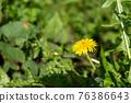蒲公英 花朵 花 76386643