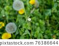 蒲公英 花朵 花 76386644