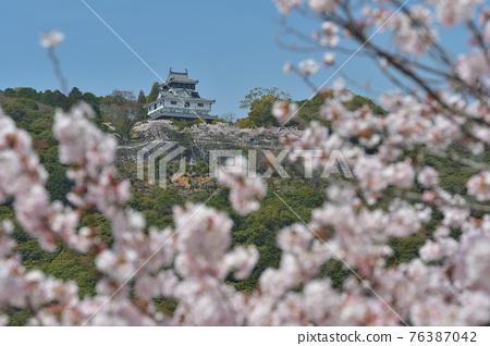 岩國城和櫻花盛開 76387042