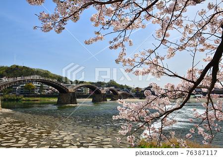Kinzaki橋和櫻花盛開 76387117