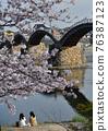 Kinzaki橋和櫻花盛開 76387123