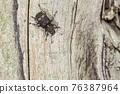 昆蟲 蟲子 漏洞 76387964