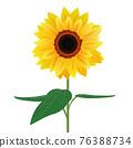 向日葵 76388734