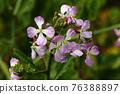 植物 植物學 植物的 76388897