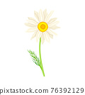 White Flower of Daisy or Bellis Perennis Plant on Green Stem with Leaf Vector Illustration 76392129
