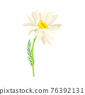 White Flower of Daisy or Bellis Perennis Plant on Green Stem with Leaf Vector Illustration 76392131