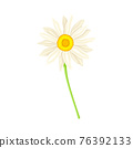 White Flower of Daisy or Bellis Perennis Plant on Green Stem with Leaf Vector Illustration 76392133