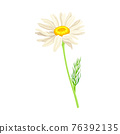White Flower of Daisy or Bellis Perennis Plant on Green Stem with Leaf Vector Illustration 76392135