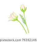 Common Daisy or Bellis Perennis on Stem with White Ray Florets Vector Illustration 76392146