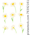 Common Daisy or Bellis Perennis on Stem with White Ray Florets and Yellow Disc Floret Vector Set 76392161