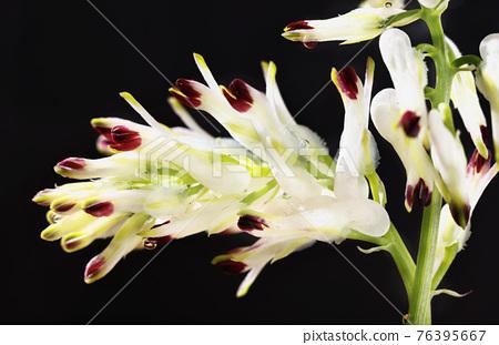 White flowers on dark background 76395667