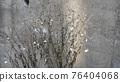 winter, plant, vegetative 76404068