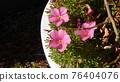 Pink Flower, CMP006 76404076