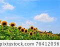 여름 해바라기 76412036