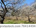 후추시 향토의 숲 박물관 매화 푸른 하늘 76414494
