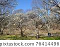 후추시 향토의 숲 박물관 매화 푸른 하늘 76414496