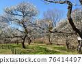 후추시 향토의 숲 박물관 매화 푸른 하늘 76414497