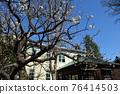 후추시 향토의 숲 박물관 매화 푸른 하늘 76414503